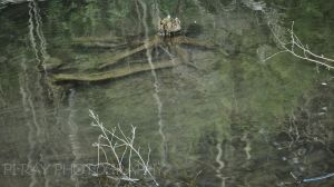 Driftwood in the Pond by Pi-ray