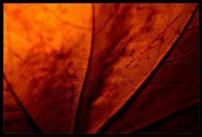 fall by Petko
