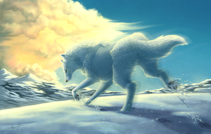 Arctic Beauty by TransparentGhost