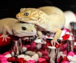 I Love U Geckos - 0779 by creative1978