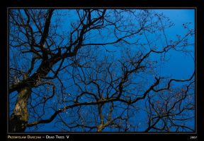 Dead Trees V by Tanthalos