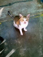 Cat In Pulau Ubin by yumithespotter
