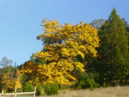 Pretty Autumn Tree by Joava