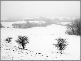 A Snowy Cold field by Twigx