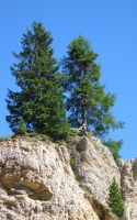 fir trees on the rock by frei76