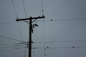 on the wires. by zombiexGLAMOUR