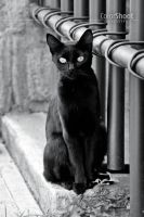 Gato negro by ColorShoot