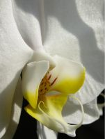 Orchid 3 by GreenMusic