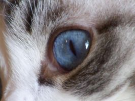 Cat's Eye by IcePanthress
