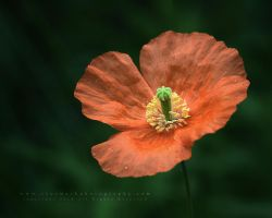 Floral Exposure by andras120