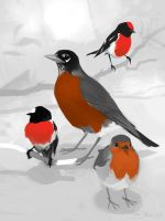 Robins by Mr--Jack
