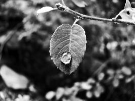 A drop on a leaf by nicelandscape