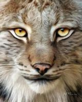 Bobcat by KomodoEmpire