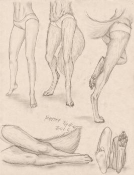 Anthro Canine Female Lower Body Study by RussellTuller