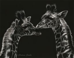 Serengeti Babies - Scratchboard by ShaleseSands