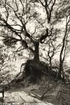 Tree by visceral