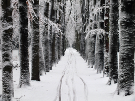 Snowy way by Elvira1990