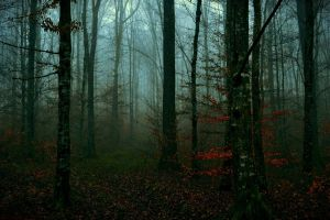 The Forest Whispers Your Name by LillianEvill