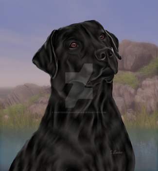 Black lab by painteddreamsdesigns