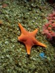 Seastar by marieeezy