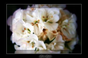 White Bouquet by Zamolxes