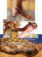 Python Pack by magenta-stock