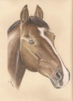 Pastel Pencil 3 by DenisaKc