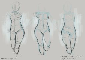 anatomy study 1 by gastrovascular