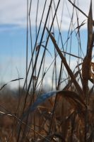 Winter grass by Atlantic-crab-meaT