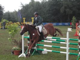 Competition horse 6 by Stock-gallery