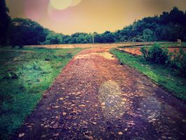 the road less travelled by Yolib