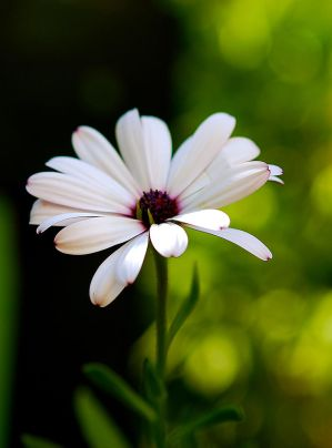 Simple beauty by Nataly1st