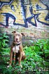Mateo Ambassador for His Breed by Recycled-Oxygen