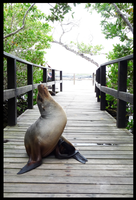 sea lion galapagos 3 by melrose86