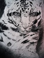 Clouded Leopard - Study in Black and White by MoonlightLuna