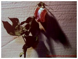 Wilted Rose II. by breathofbetrayal