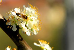 Spring and Bee by LENA3689