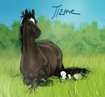 Tizme by sealle