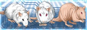 Rat Banner Commission by ArcaneAvis