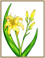 Prismacolor Daylily by Easternwind