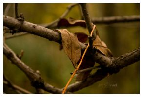 autumn01 by nieraviel