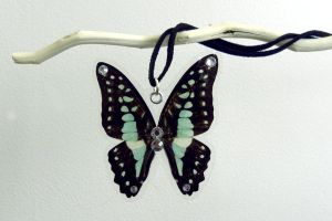 Blue Jay Necklace (Graphium eventus) by TheButterflyBabe