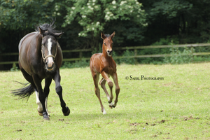 Escada and foal Stock 1 by Saerl