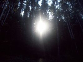 Sun in between trees by eyannaandkianalovesu