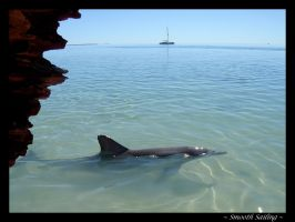 Dolphin in Western Australia by coathanger007