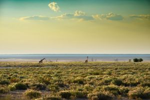 The Breadth of Etosha by suffer1