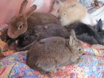 My Bunnies-Eclair,Butternut,Carbon,Slushy,andRubix by Sapphire-Ashesx