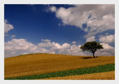 Lonely Landscape by rahimyts