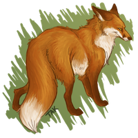 Red Fox 2 by TaksArt