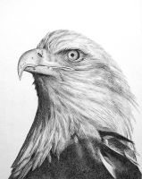 eagle WIP by topazlights